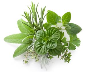 Nonfreeze – Herbs & Spices