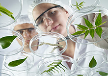 stock-photo-20740135-scientist-examining-petri-dishes
